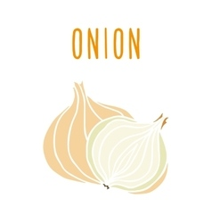 Onion isolated on white vector image vector image