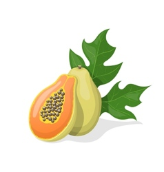 Papaya on white background vector image vector image