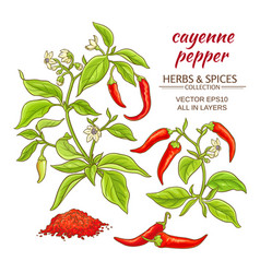 Cayenne pepper set vector