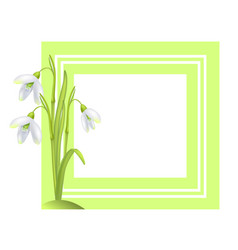 greeting card with framing snowdrop galanthus bell vector image