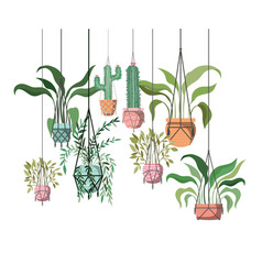 Houseplants on macrame hangers icon vector