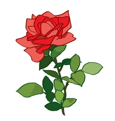 red rose - plant vector image