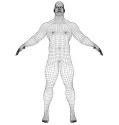 wire frame athlete body on white background vector image