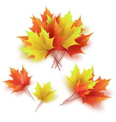 autumn leaves bright colourful autumn maple vector image