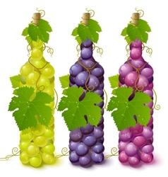 vine grape bottles vector image