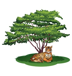 A tiger under the tree vector