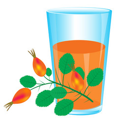 Branch of the wild rose and juice vector