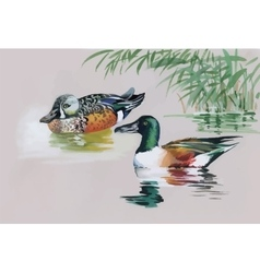 Geese flock swimming on pond watercolor vector image