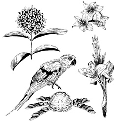 tropical flowers and Parrot for your design vector image vector image