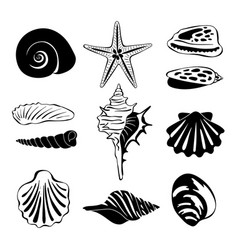 Black monochrome of marine shells vector