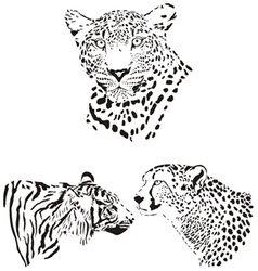 Head of cheetah leopard and tiger vector image vector image
