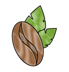 coffee seed with leafs vector image
