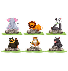 different types of wild animals on rocks vector image