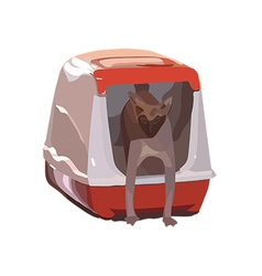 Cat breed Sphynx comes out of the house-toilet vector image vector image