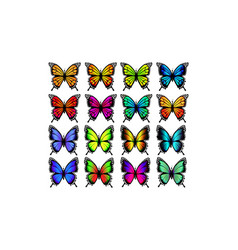 group colorful butterflies butterfly vector image