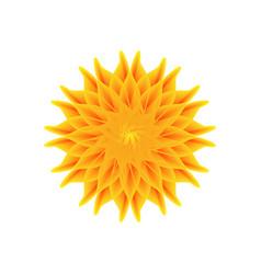 orange flower on a white background vector image