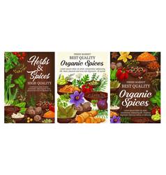 Pepper basil cinnamon vanilla herbs and spices vector