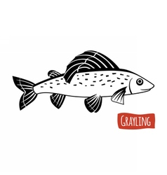 Grayling black and white vector image vector image
