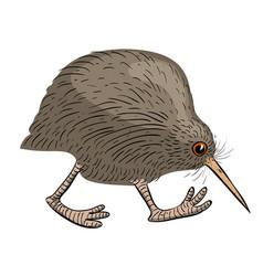 cartoon image of kiwi bird vector image