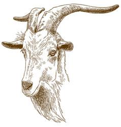 engraving big goat head vector image