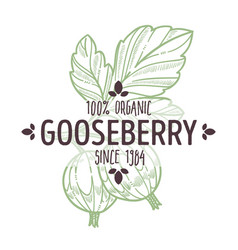 gooseberry isolated icon with lettering organic vector image