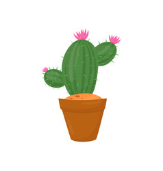 green cactus in brown pot plant with little pink vector image
