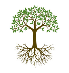 Green spring tree with root vector