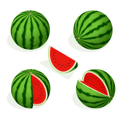 isometric watermelon and pieces refreshing vector image