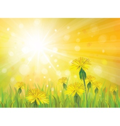Spring yellow sun vector