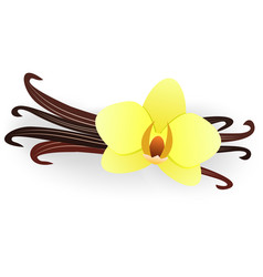 Vanilla flower and vanilla sticks isolated on a vector
