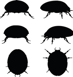 Bug scarab silhouette vector