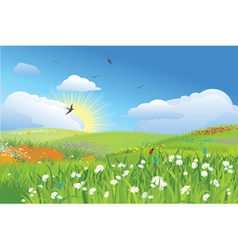 Colorfull meadow flower and grass blue sky vector