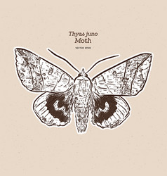 thyas juno is a species moth family vector image