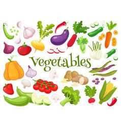 set of fresh vegetables for your design vector image