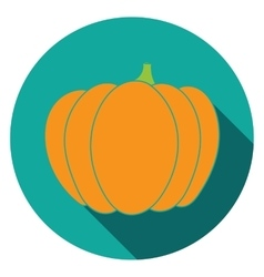 Flat pumpkin icon colorful vector image vector image