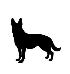 black silhouette of german shepherd dog standig vector image