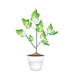 A Jasmine Flower in Ceramic Flower Pot vector