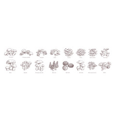 Collection different realistic edible mushrooms vector