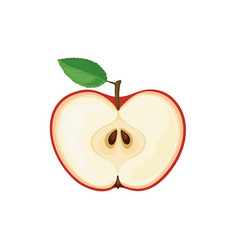 cut apple icon vector image