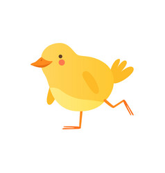 Cute bachicken walking funny cartoon bird vector