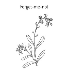 Forget-me-not hand drawn vector
