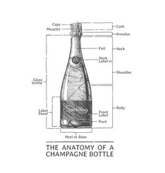 Hand drawn of champagne bottle vector