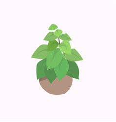 potted plant isolated on white background flat vector image
