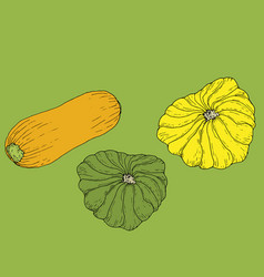 set ripe juicy yellow zucchini and yellow and vector image
