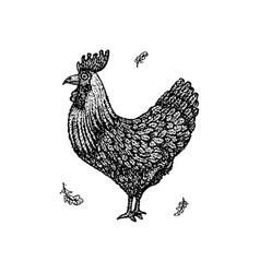 dotwork chicken rooster vector image