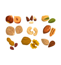 flat icons nuts and seeds hazelnut vector image