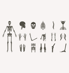human bones orthopedic and skeleton silhouette vector image