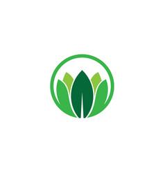 leaf eco logo vector image