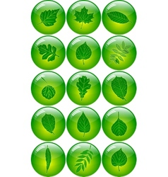 Set of Abstract Leaf Icons vector image vector image