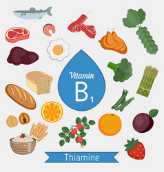 Vitamin b1 or thiamin infographic vitamin b1 or vector